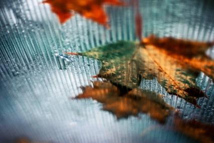 9 30 Leaves on glass rain overhead
