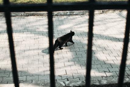 black-cat-small