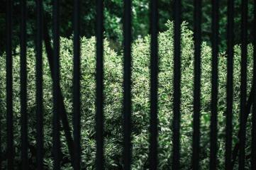 Cage the Jungle. Warsaw, 2018