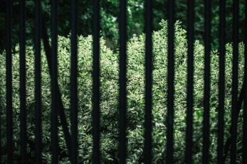 fence-small
