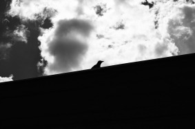 333-365-The-Crow-333-365-small