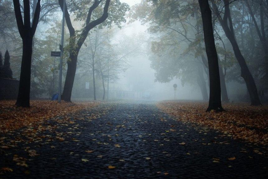 fog-7-small