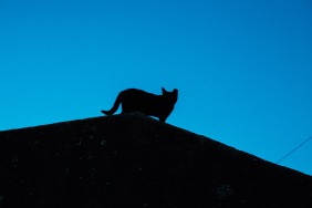 one-cat-silhouette-porto-small