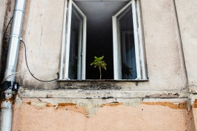 tree-in-the-window-small